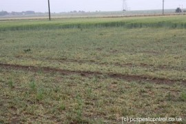 Damage caused to a farmers crop by rabbits