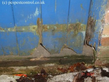 Damage to a door by Rats Retford.
