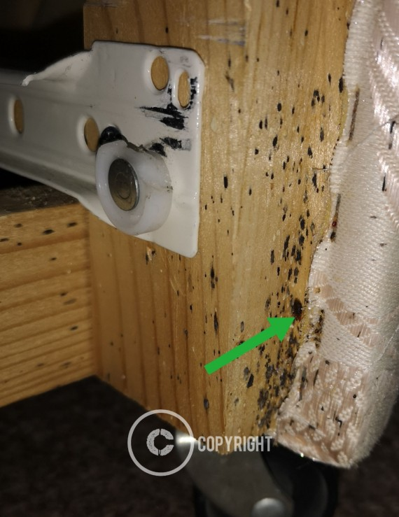 Bed Bugs droppings and eggs found in a divan base draw opening on a job in Worksop.